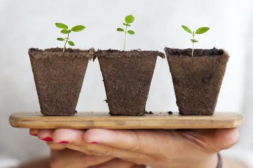 Por que las plantas necesitan estar enterradas