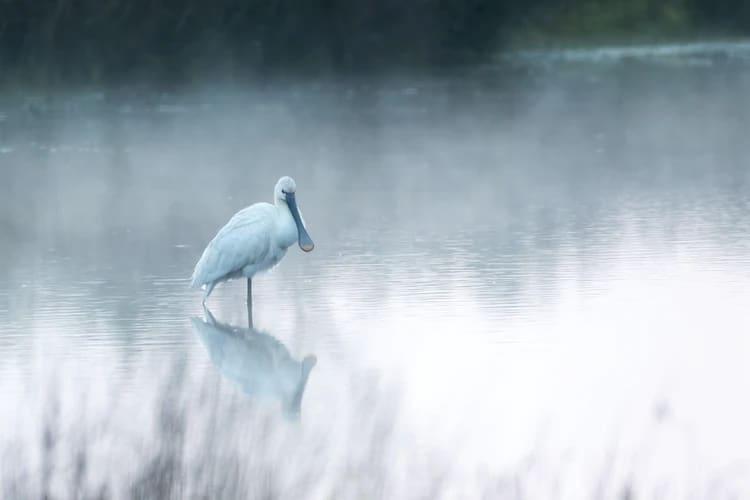 Por que se forma el reflejo nuestro en el agua