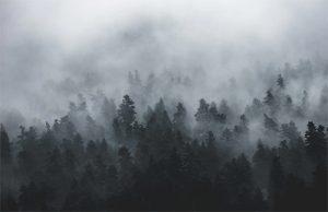 Por que se forma la niebla